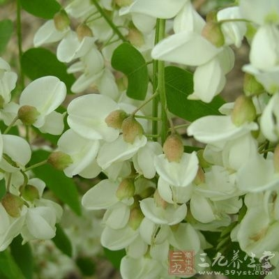 槐花(半两炒,半两生)