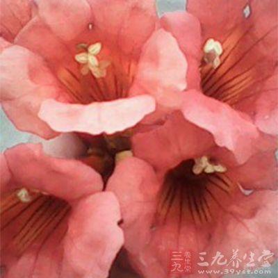 血凝用红花