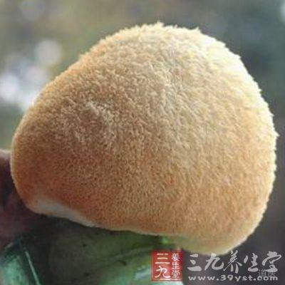 猴头菌还能抑制黄曲霉素对大鼠的致肝癌作用