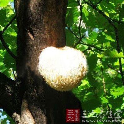 猴头菇是很多人比较喜爱吃的,猴头菇的营养价值很高
