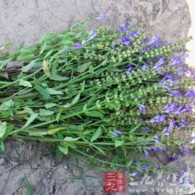 夏枯草茎、叶、穗及全草均有降压作用