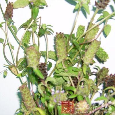 夏枯草作为一种草药,它的功效与作用是非常丰富的