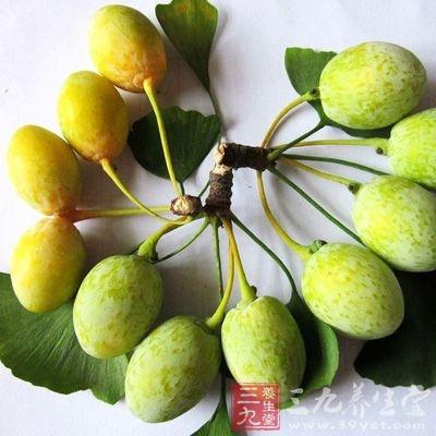 银杏果果仁含有多种营养元素