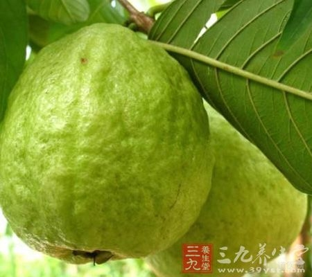 番石榴根皮及其果实有降血糖作用