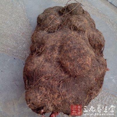 鲜首乌:新鲜的叫鲜首乌,与生首乌相似,但润肠、消肿效果更佳