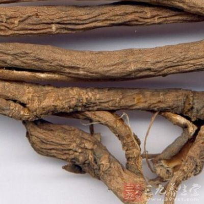 五加皮主治男子妇人脚气,骨节皮肤肿湿疼痛
