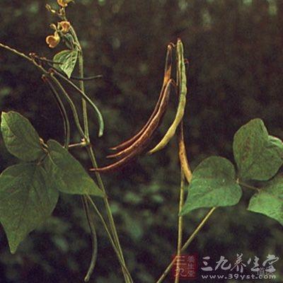 赤小豆是人们生活中不可缺少的高营养、多功能的杂粮