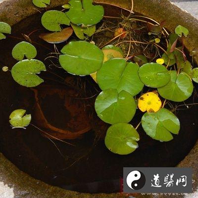 浮萍又名浮萍草、水苏,为浮萍科植物紫背浮萍或青萍的全草