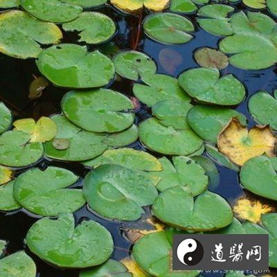 青萍水浸膏对奎宁引起衰竭的蛙心有强心作用