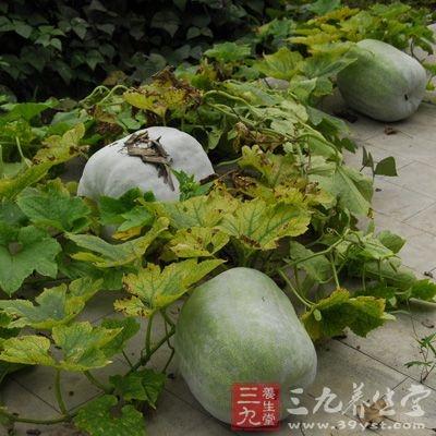 冬瓜200克,嫩荷叶3小块,薏苡仁、赤小豆各25克,水鸭肉250克