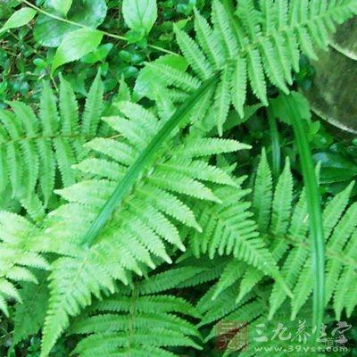 根茎为不规则背腹扁平的条状、块状或片状,多弯曲