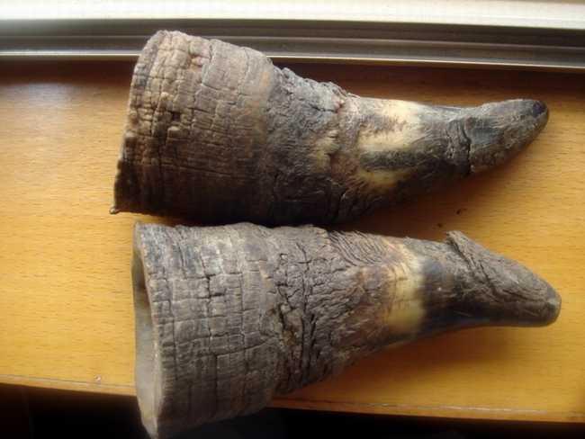 犀牛角图片