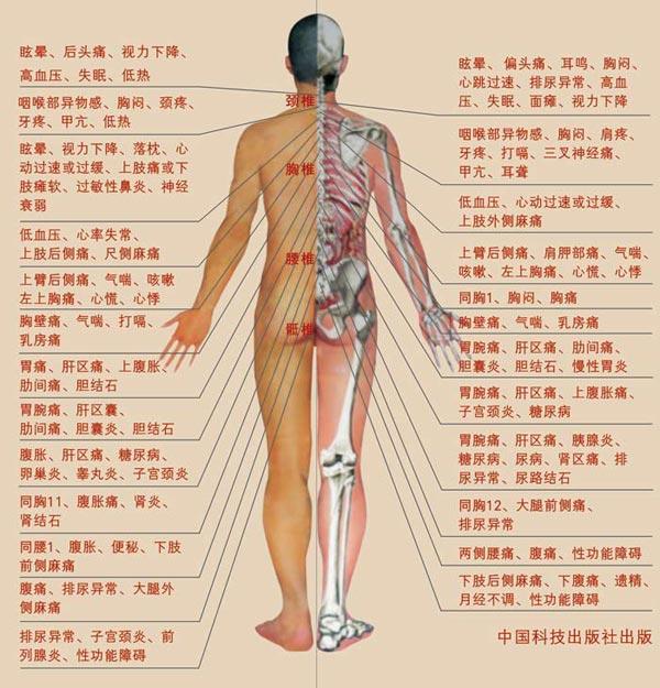 人体内脏器官常见疾病
