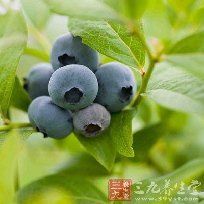 蓝莓可以驱除眼睛疲劳让眼睛继续工作
