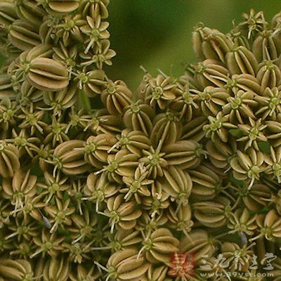 为伞形科植物旱芹的干燥成熟果实