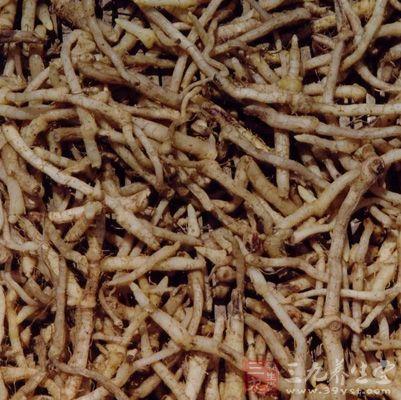 将玉竹洗净,切成节,用水稍润,煎熬2次,收取药液1000克