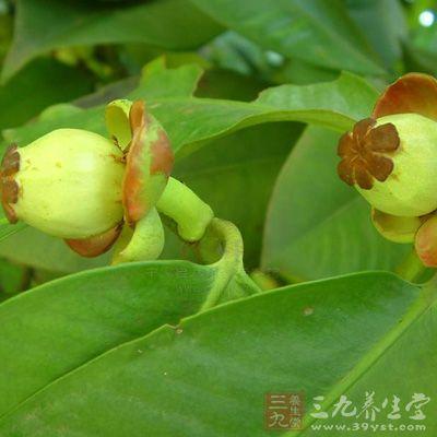 山竹2个,核桃(鲜)10—15克,蔓越莓10克,银耳2朵,冰糖2颗