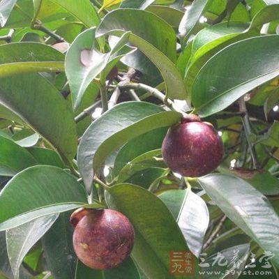 每一百克山竹的营养素含有许多物质