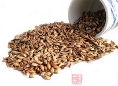 麦芽能消化米面类食物,用于米面类食物引起的食积
