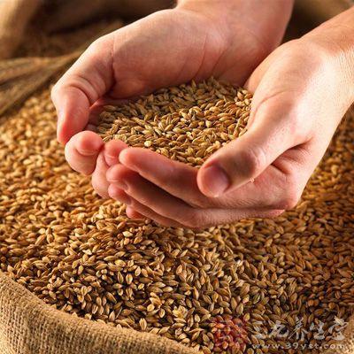 主料:麦芽150克