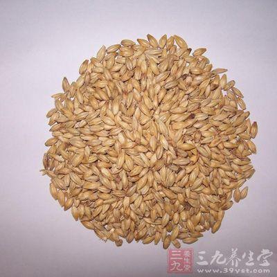 麦芽治疗黄疸症