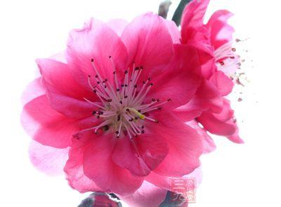 桃花的功效与作用及食用方法,桃花的副作用与禁忌