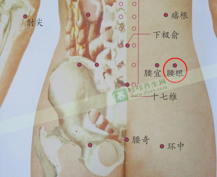 腰眼穴位准确位置图