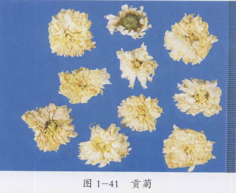 菊花的功效与作用及禁忌,菊花图片,中药菊花的用法