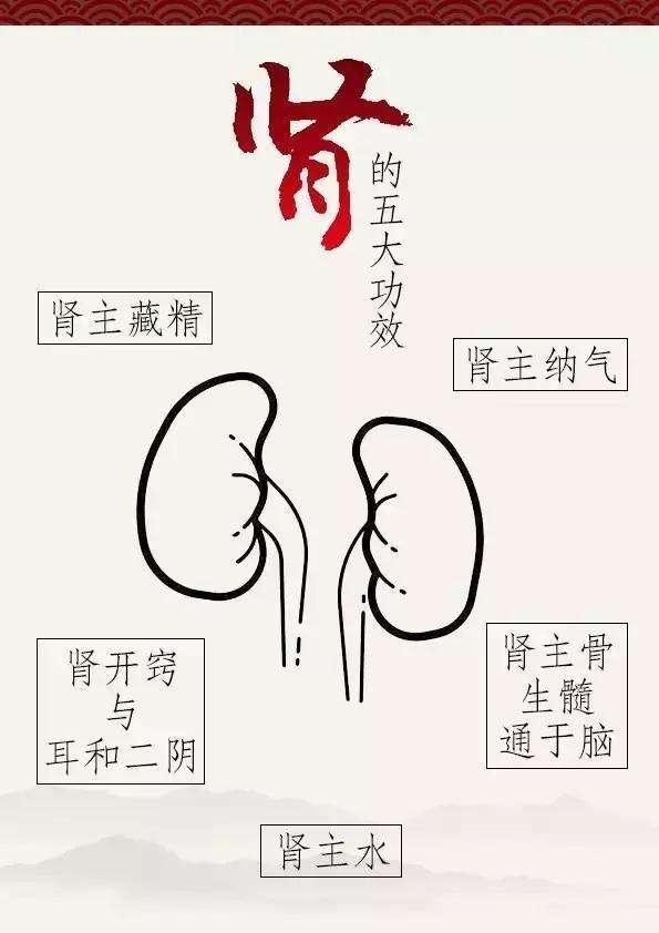 肾阳虚和肾阴虚的区别
