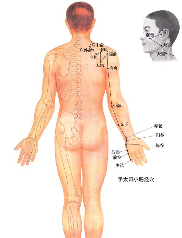 人体穴位经络大图