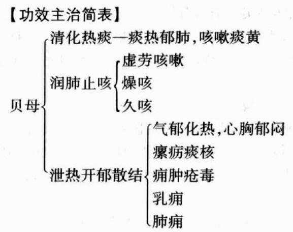 川贝母,浙贝母的功效与作用